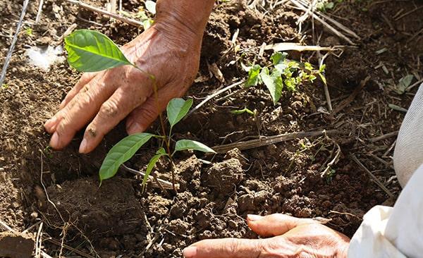Riforestazione ecommerce green01
