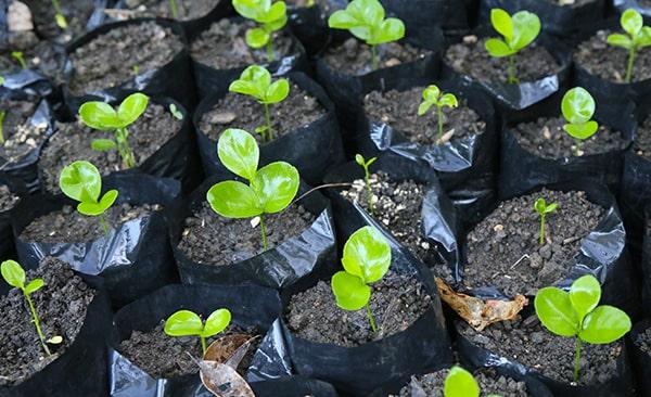 Riforestazione ecommerce green02