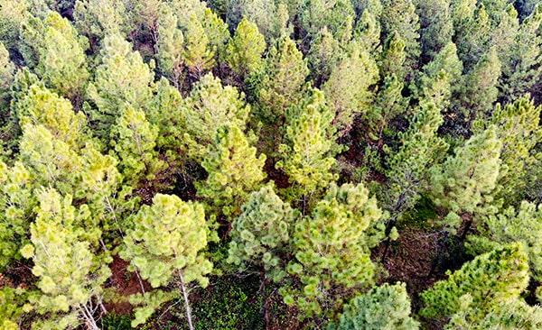 Riforestazione ecommerce green03