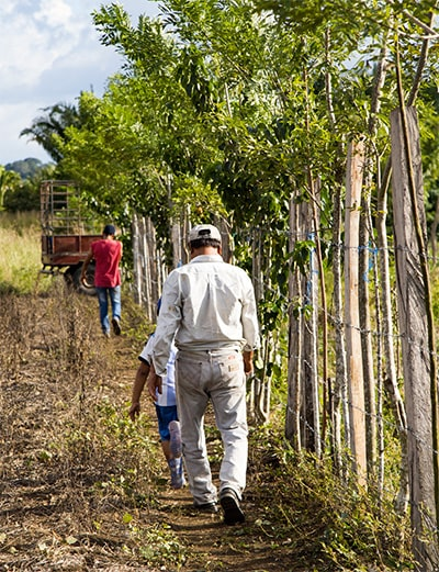 Riforestazione ecommerce green04